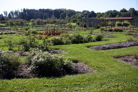 Secrest Arboretum 6