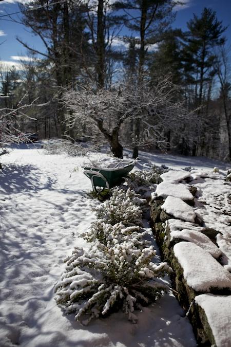 first snow 1