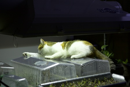cat under grow light 2