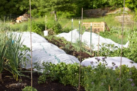 Main Vegetable Garden 8