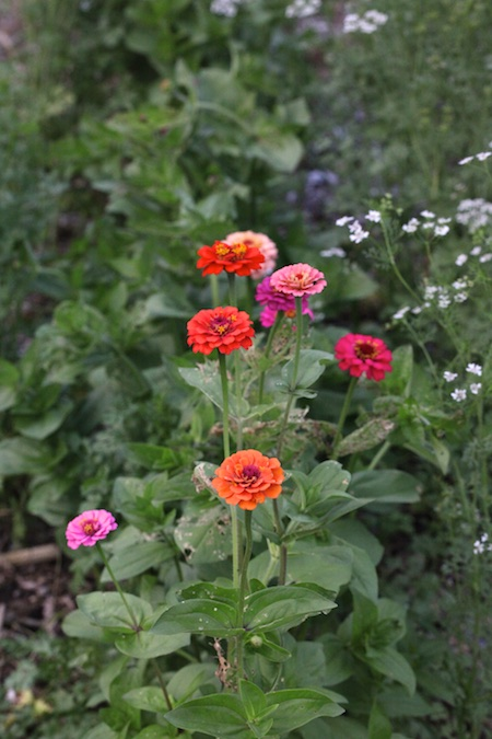 cutting garden flowers 1