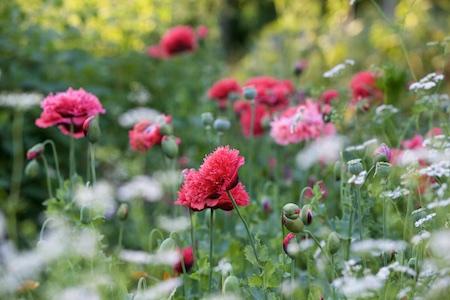 the garden in early july 12