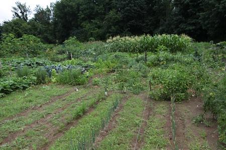 Community Garden 11
