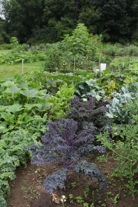 Community Garden 9
