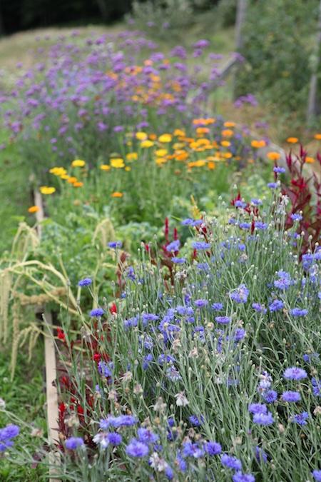 shelburne farms edible gardens 8