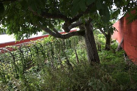 lacko-slatt-walled-lower-garden-17