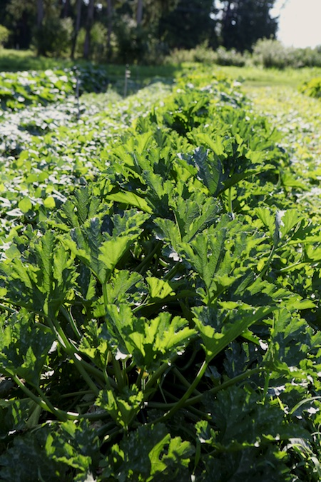 shelburne farms market garden 10