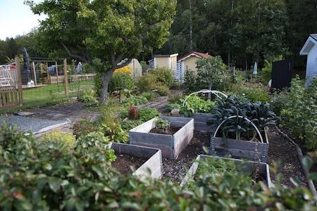swedish-community-garden-day-4-12
