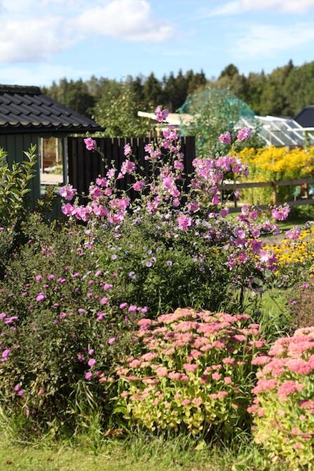 swedish-community-garden-day-4-2