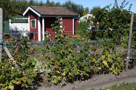 swedish_community_garden_2-1