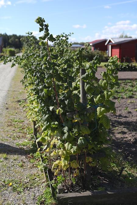 swedish_community_garden_2-4