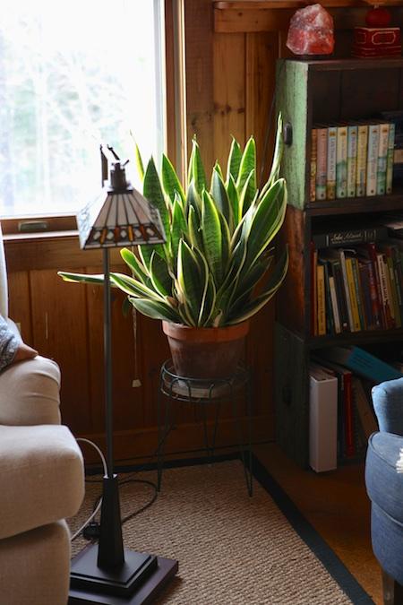 indoor-garden-3