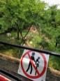 Darwin award failure at the lion enclosure.