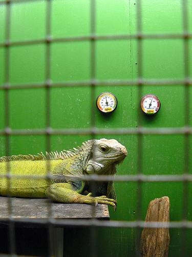 Plans for Building an Iguana Cage  Animals  momme