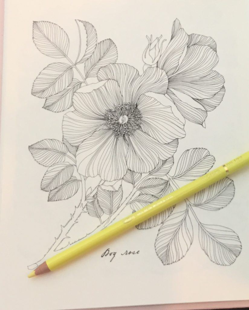 The Flower Year A Coloring Book Coloring Queen