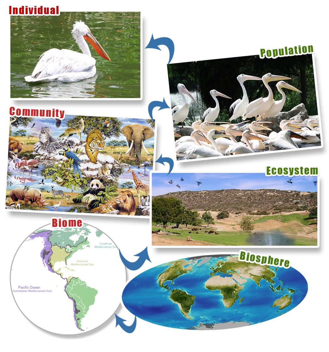Ecosystem Organization Gallery