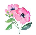 Flower3_300px