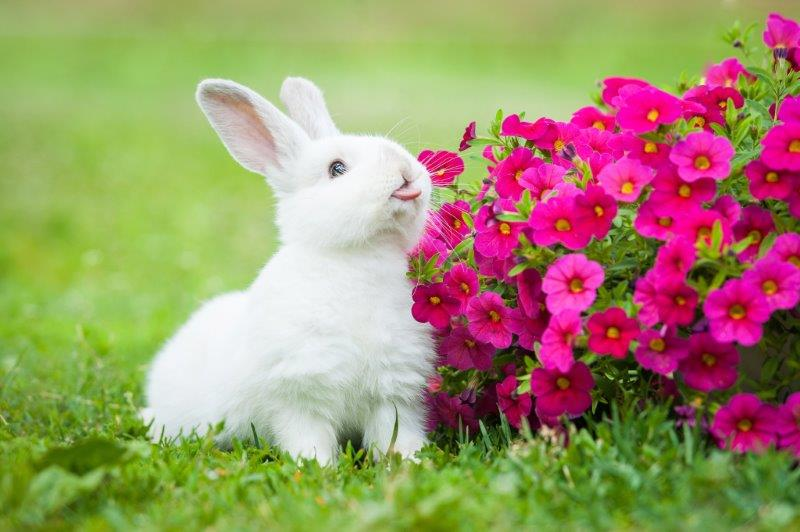 cute baby rabbits 27