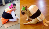 The gallery for --> Dog Sushi Costume