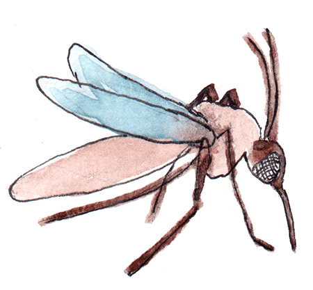 watercolor painting of a mosquito