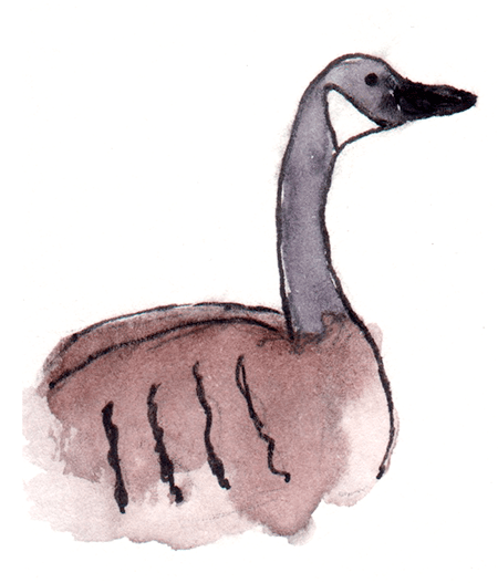 watercolor painting of a canada goose