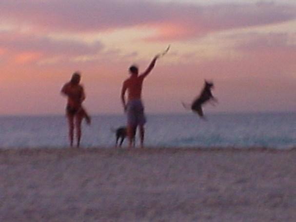 SuperDog at Leighton Beach