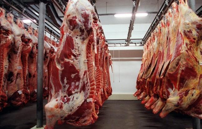 abate de bovinos