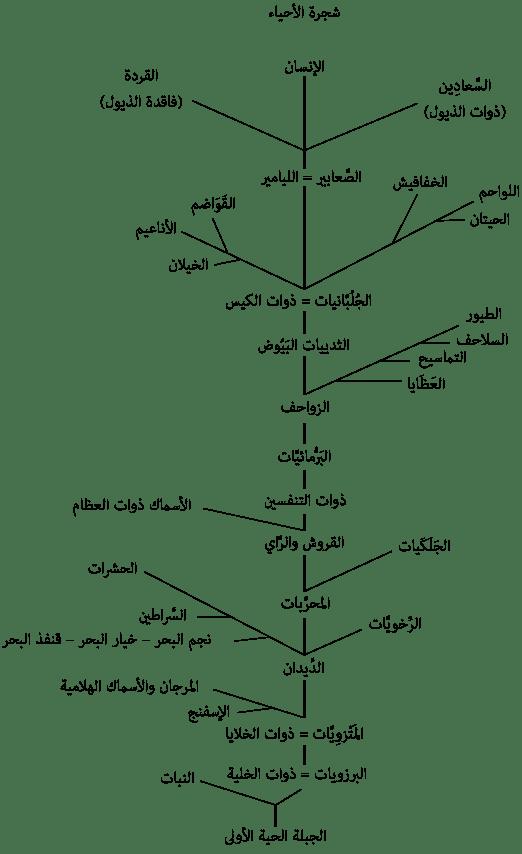 سيرة التطور من سيرة داروين أصل الأنواع هنداوي