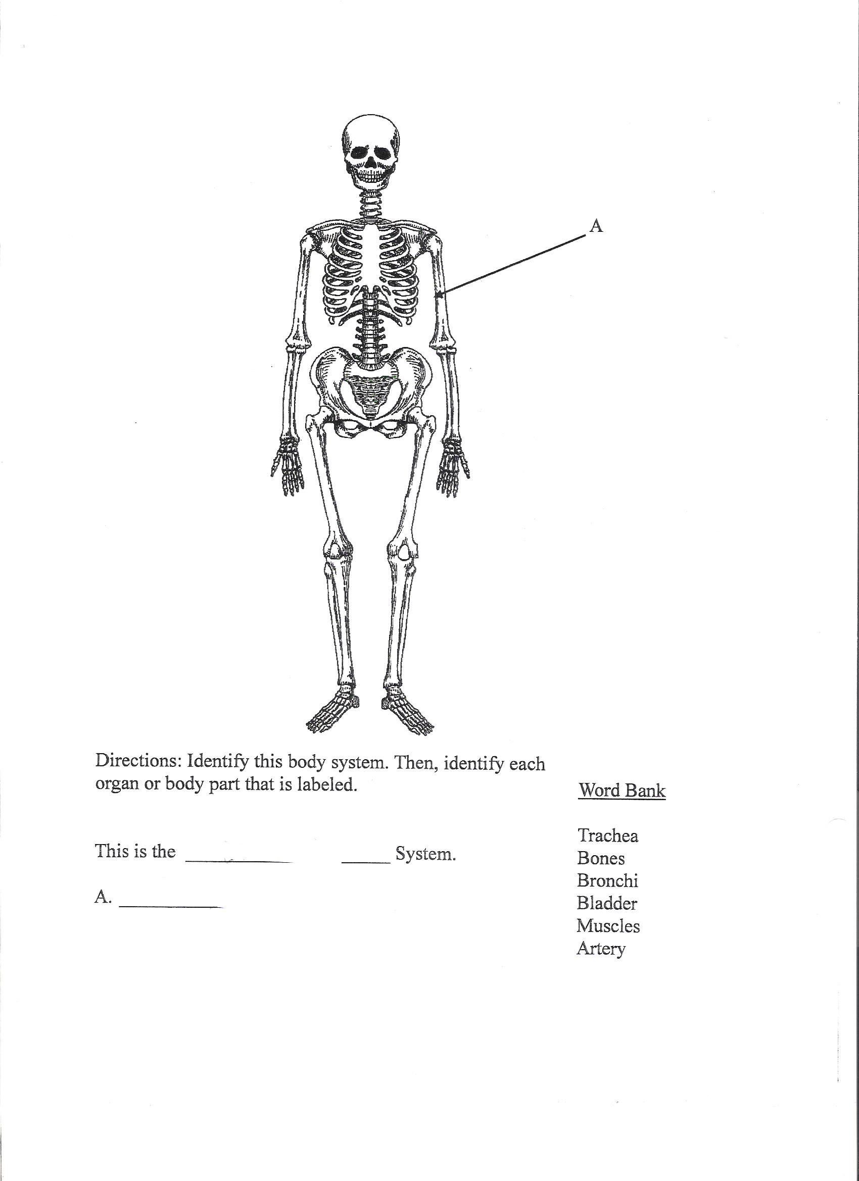 Mahon-POST Human Body Systems and Functions Assessment