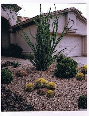 arizona native plants landscape