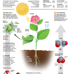 Lesson How Plants Make Food- Photosynthesis   BetterLesson [ 1131 x 800 Pixel ]