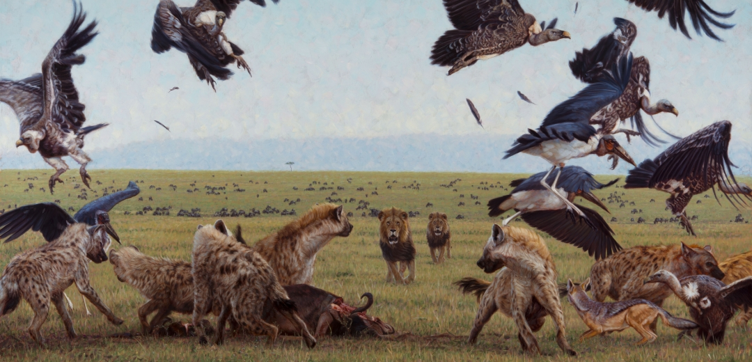 Artwork  Wildlife Art of John Banovich