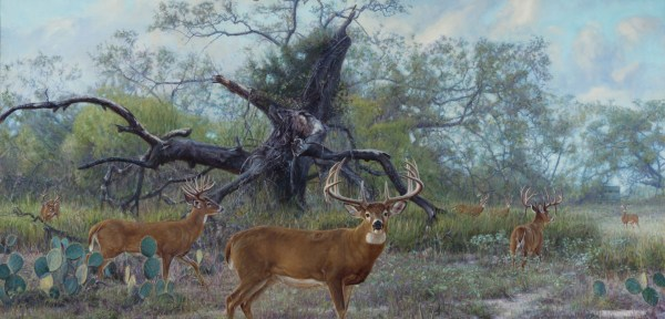 Artwork - Wildlife Art Of John Banovich
