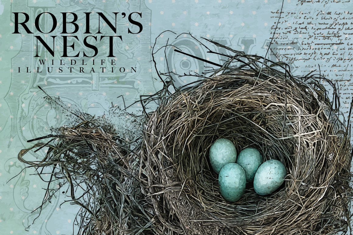 Robins Nest Vector Illustration  Illustrations on Creative Market