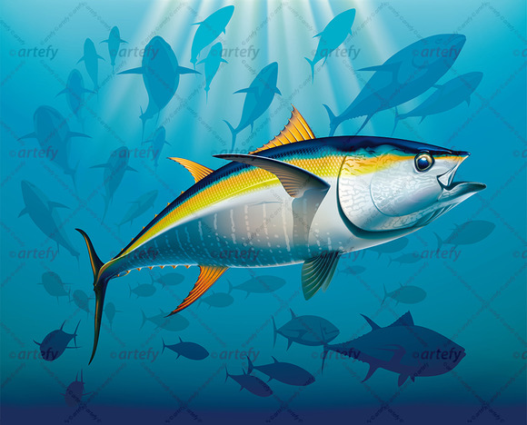 Gambar Ikan Tuna Kartun  Designtube  Creative Design Content