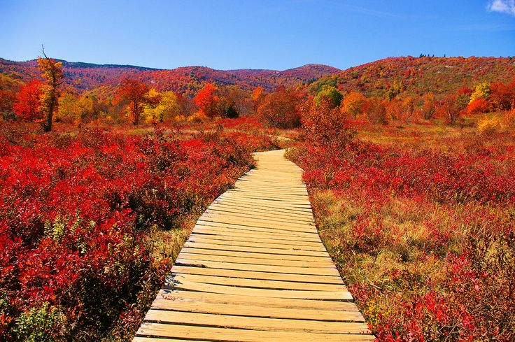asheville fall foliage best