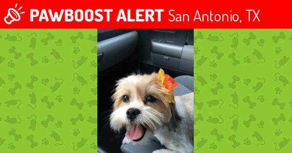Lost Dog In San Antonio Tx 78228