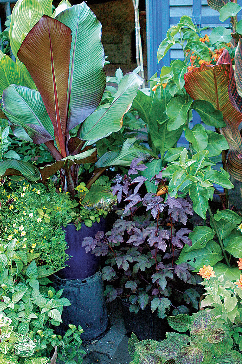 staging a container plant display