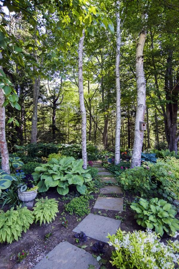woodland garden - finegardening