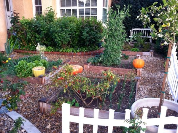 karen's -lawn front yard in california