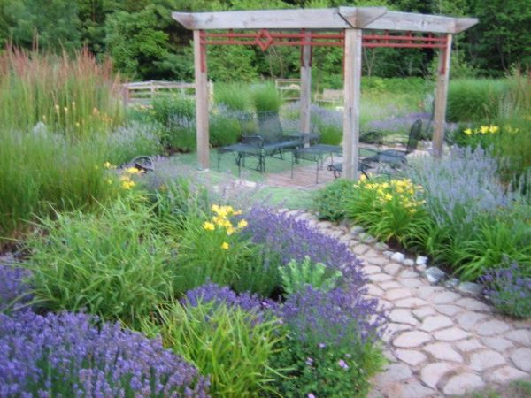 lavender garden wins backyard