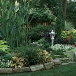 Dealing With Dry Shade Finegardening