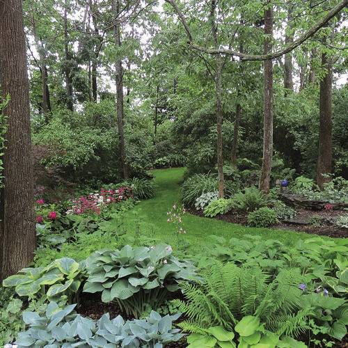 woodland garden design - finegardening