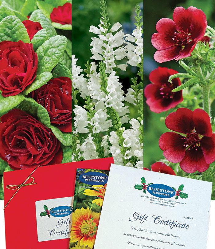 Bluestone Perennials Gift Certificates