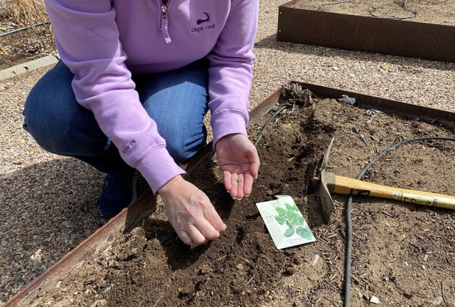direct sowing seeds