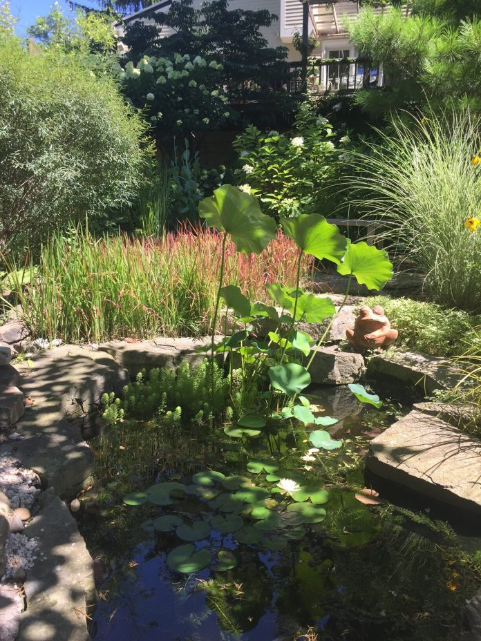 garden pond covered in plants
