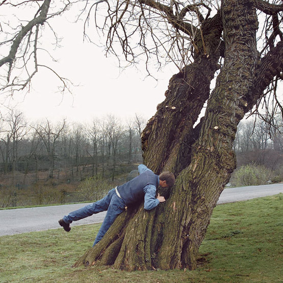 How To Attach Something To A Tree