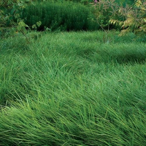 LowMaintenance Alternatives to Lawns  FineGardening