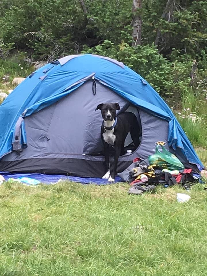 Finn is loving camping