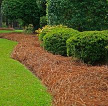 put mulch pine